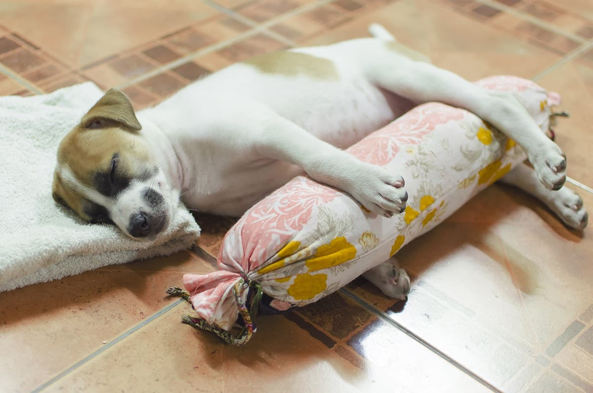 Should Your Pup Sleep In Bed With You