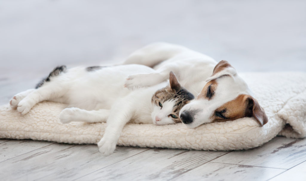 dog and cat sharing bed