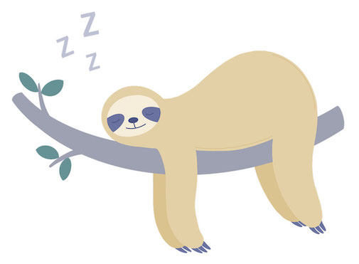 Sloth Sleeping Cycle